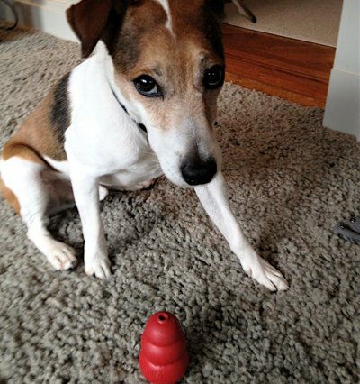 dog-with-toy