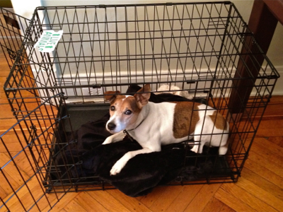 jack-in-new-crate
