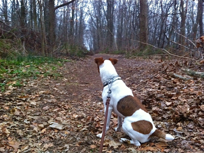 dog-in-woods