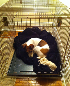 jack-in-nelson's-crate