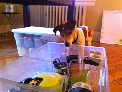jack-helps-pack-kitchen