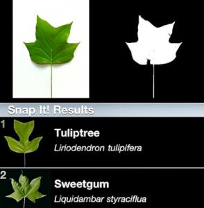 leafsnap-app-results