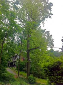 tree-in-neighborhood
