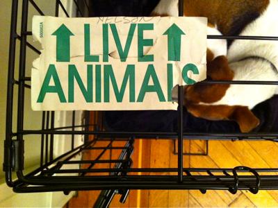 live-animals