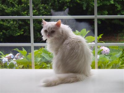 sophie-the-cat