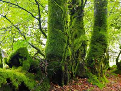 trees-with-moss