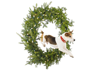 jack-jumps-through-wreath