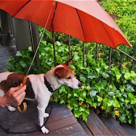 jack-under-umbrella
