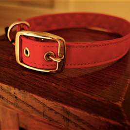 red-dog-collar