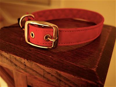 red-dog-collar