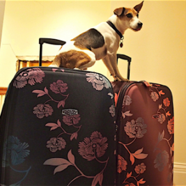 jack-on-luggage