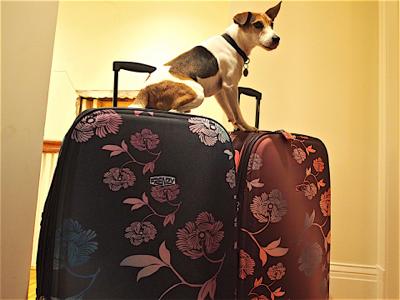 jack-on-luggage