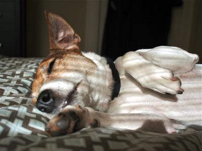 jack-napping