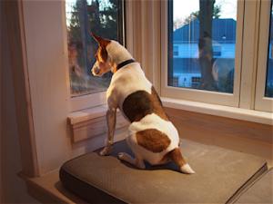 jack-likes-new-window-seat