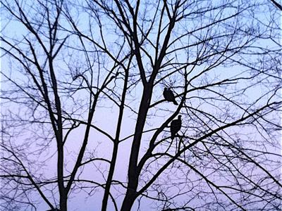 turkeys-in-tree