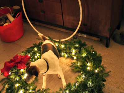 jack-checking-out-wreath