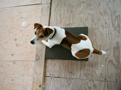 jack-on-carpet-square
