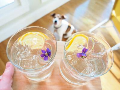 blue-violet-in-drinks