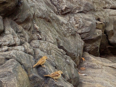 birds-on-rocks