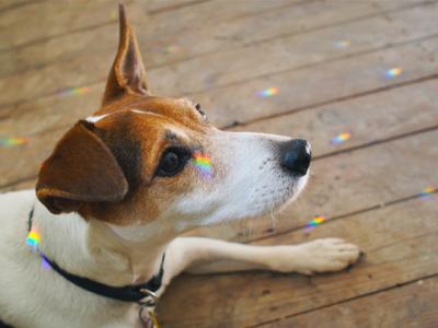 jack-and-rainbows