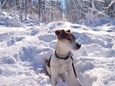 jack-in-snow