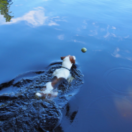 jack-fetching-in-pond