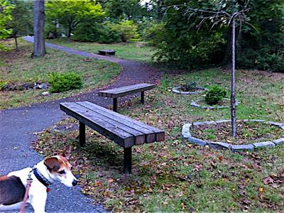 jack-in-allison-park