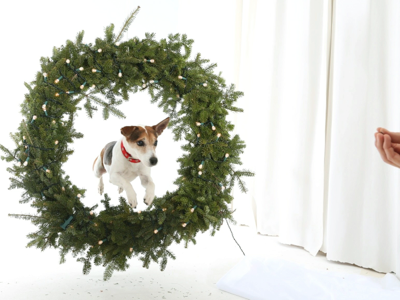 jack-jumping-through-wreath