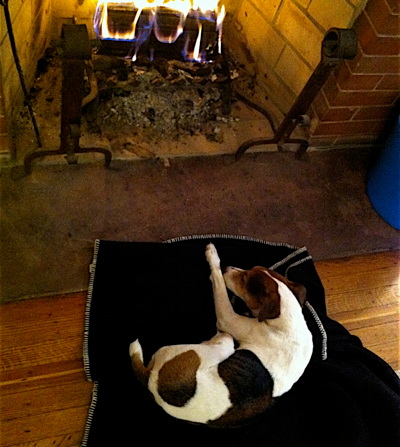 jack-resting-by-fire