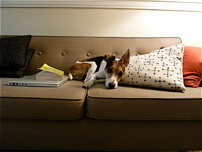 jack-on-the-couch