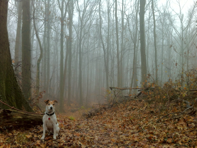 jack-in-the-woods